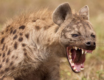 Mr President, in Malawi, hyenas exist in both high and low places, arrest them all