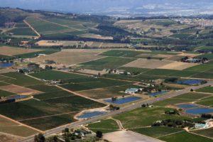 Algeria Wine