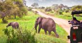 Africa Tourism