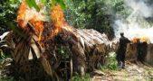 Frelimo committing war crimes