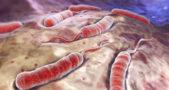 Chikwawa hit by Cholera