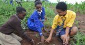 BEAM - Planting Trees